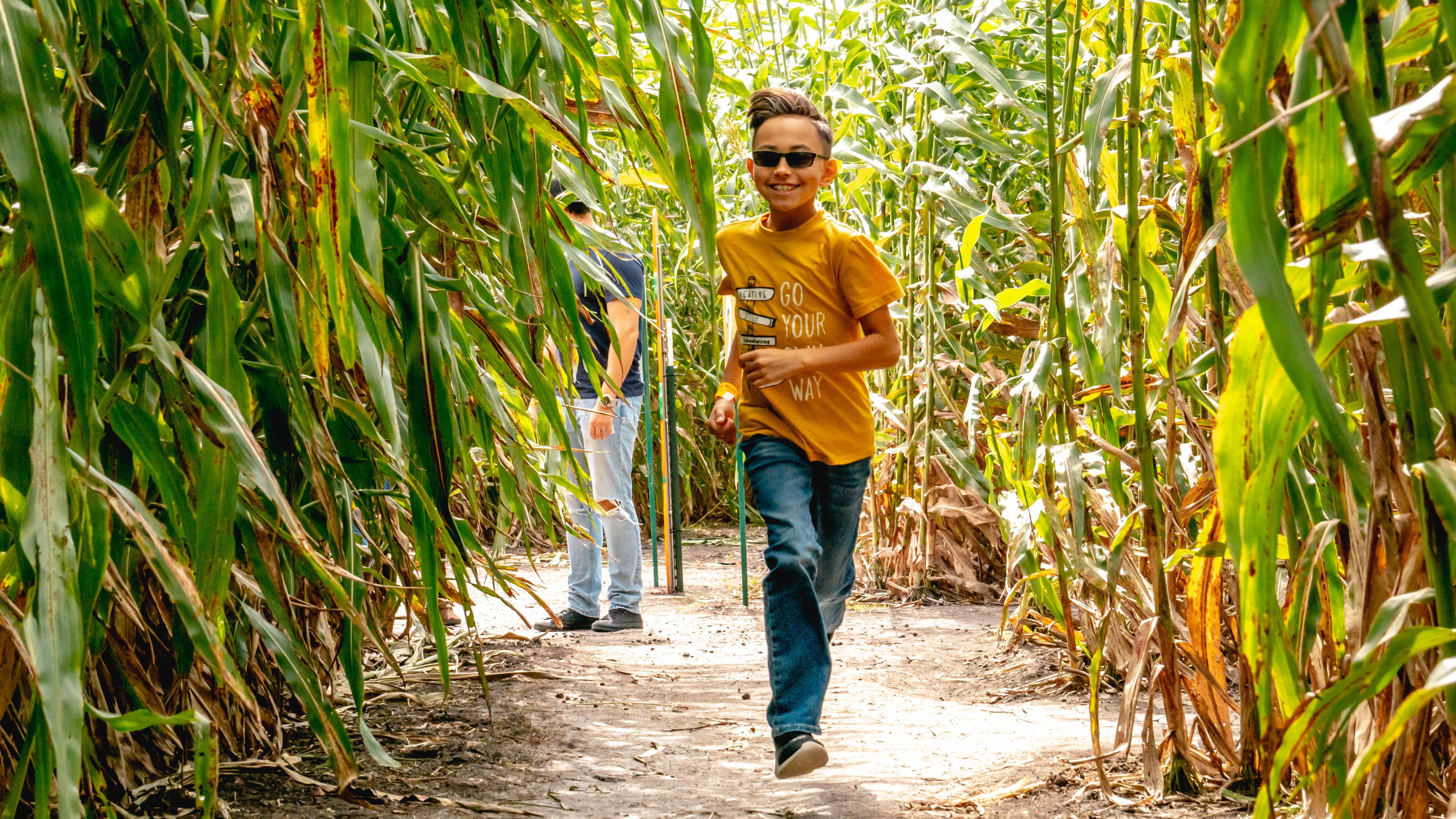 Corn Maze in Robstown