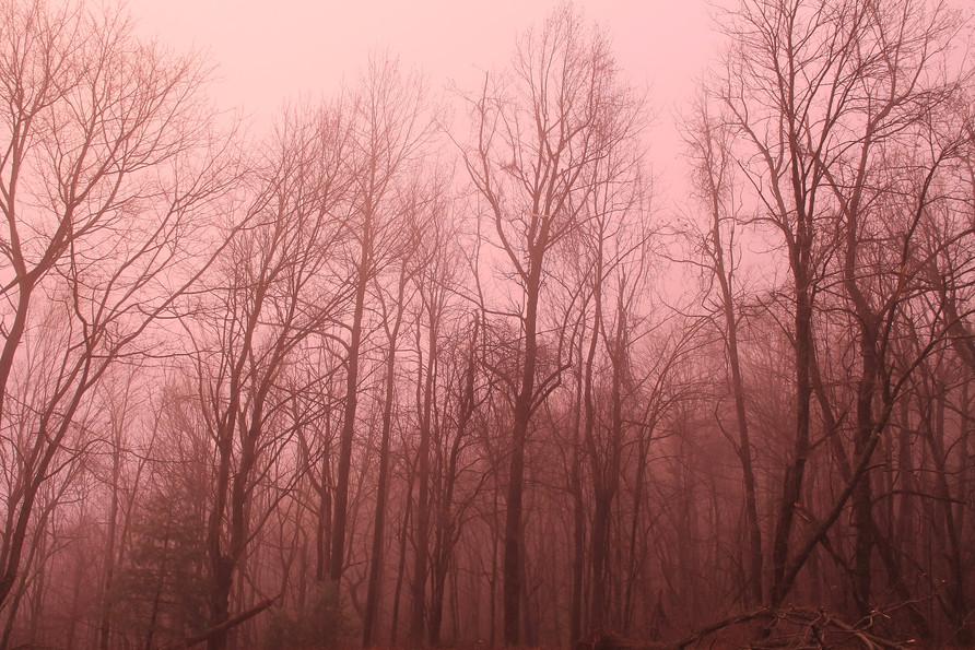 pink trees.jpg