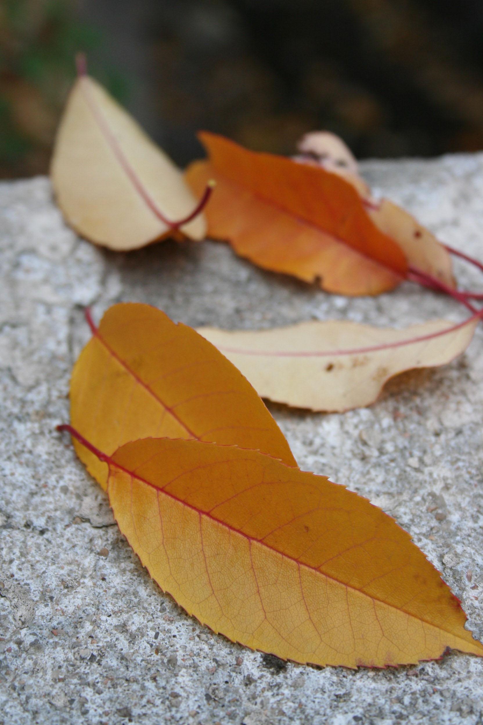leavesonstone