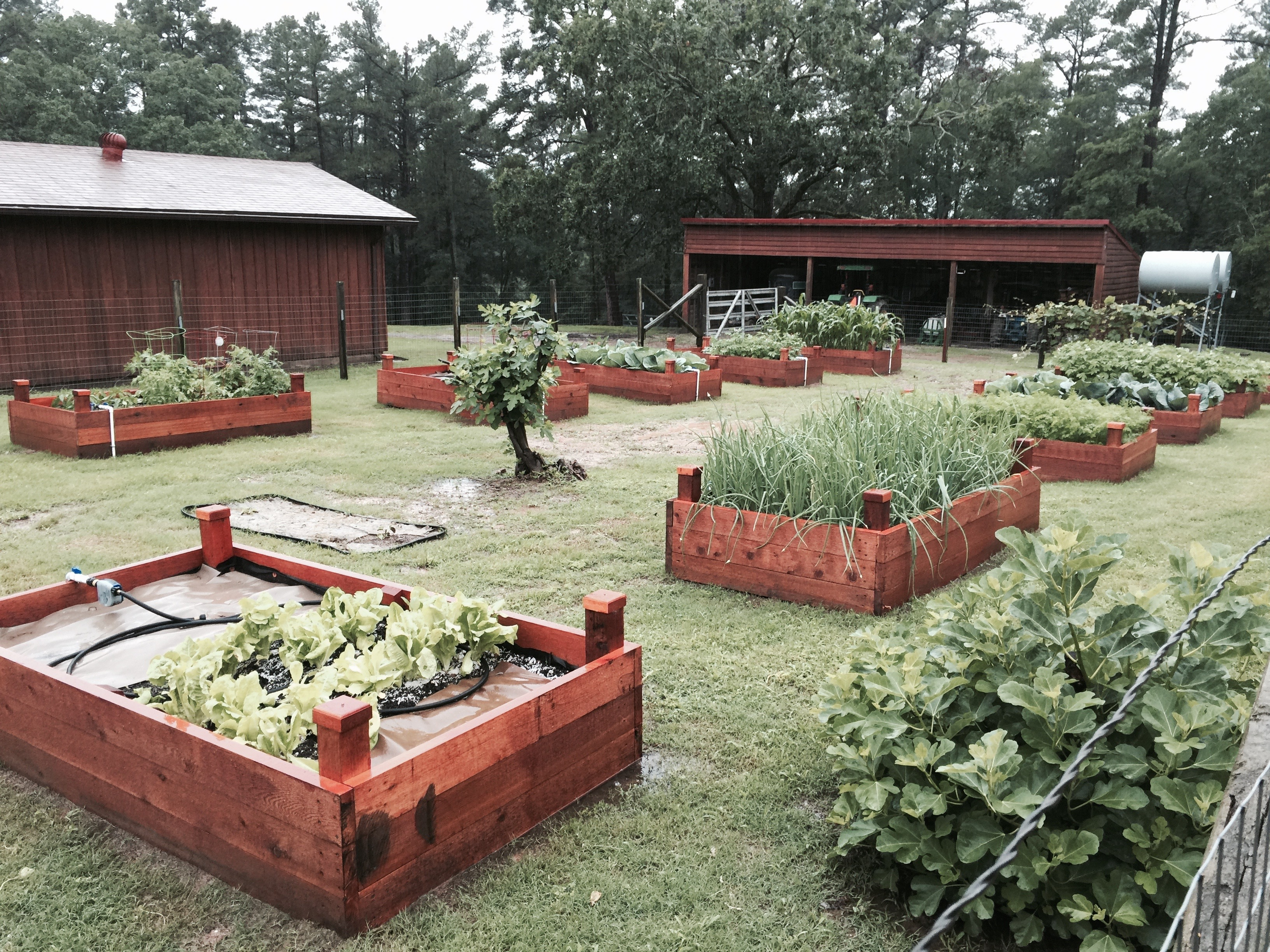 Raised bed garden with veggies