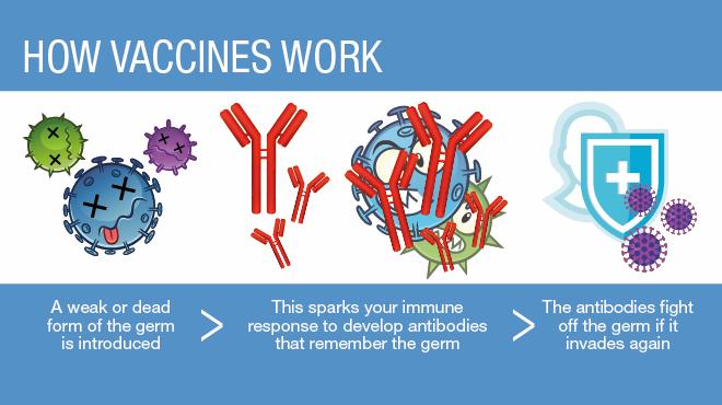How vaccines work (source: Mayo Clinic Health)