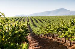 Earthbound Organic Wines