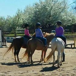 pony group