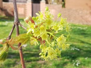 Tree flowers no.3
