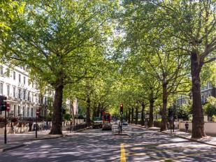 Tree app for London
