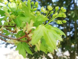 Tree flowers no.2