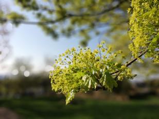 Tree flowers no.5