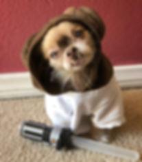 Chewie the Chi Princess Leia