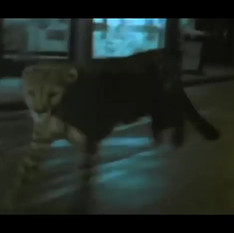 DAY OF THE ANIMALS/WILD BEASTS Trailer