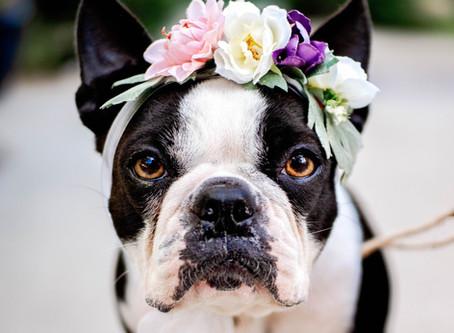 Including Mr. doggo in your wedding day