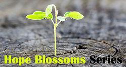 hope blossoms.jpg