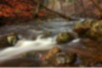 healing brook.jpg