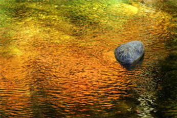 rock in stream.jpg