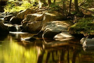 golden stream.jpg