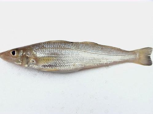 Silver Silago(lady fish/kilanga/kane 8-12 Pcs) Gross Wt:1KG     Net Wt:850gms