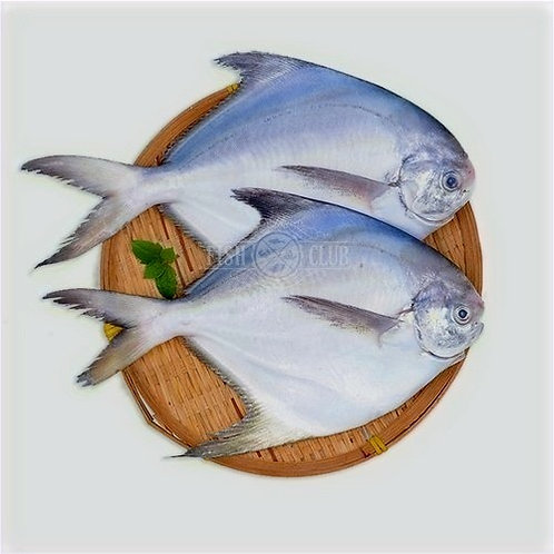 White Pomfret (Thella chanduva 6-8 Pcs) Gross Wt:1KG     Net Wt:600gms