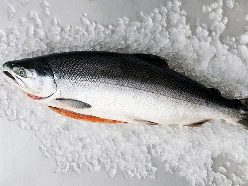 Indian Salmon (Maga) Gross Wt:1KG     Net Wt:700gms