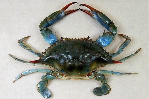 Blue Sea Crabs (peetha)- Live Gross Wt:1KG     Net Wt:700gms