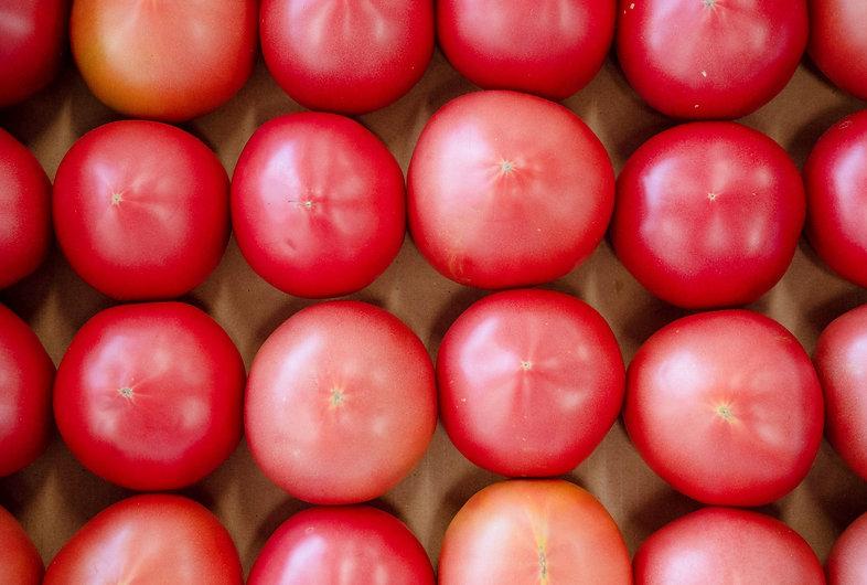 並んだトマト