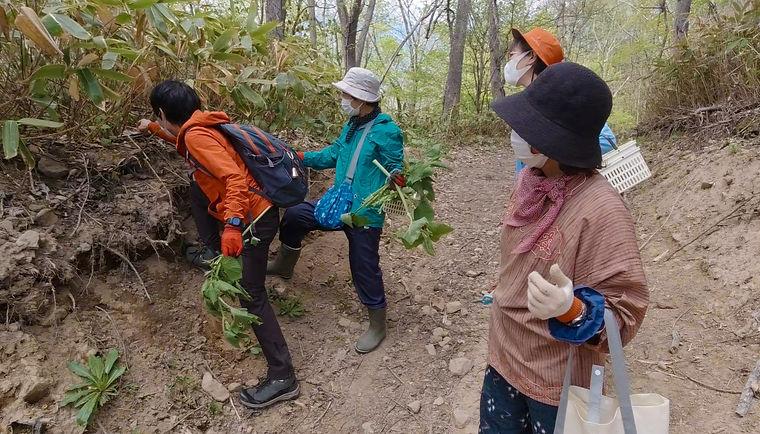 山歩きで山菜採取
