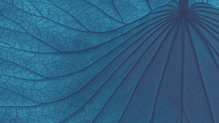 leaf-5360962_1920_edited_edited.jpg
