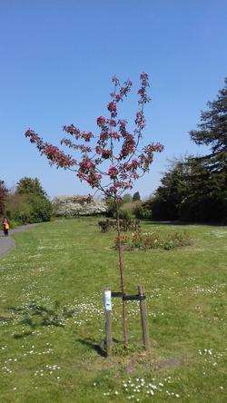 Kendor Gardens : Tree for Terry Barr