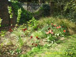 John Innes Park : Wallflowers