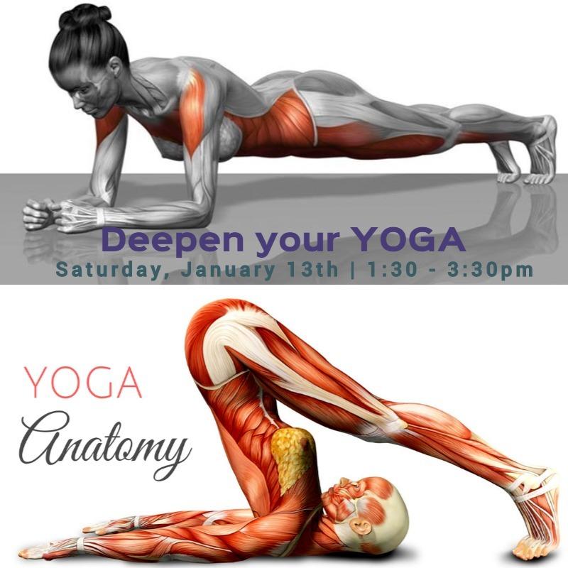 yoga anatomy insta