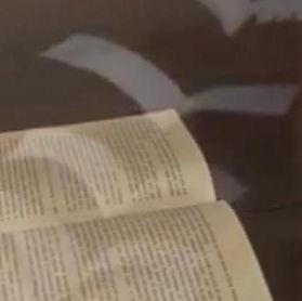 gabbiano dal libro.jpg