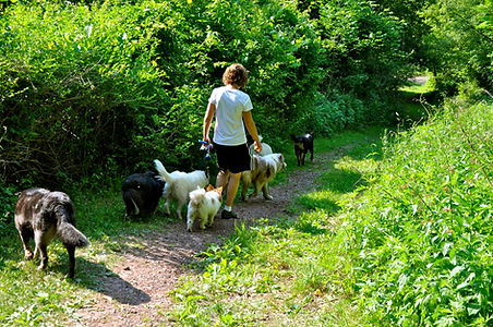 Becky and the pack o the trail