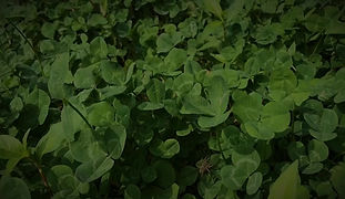 Food Plot Strategies