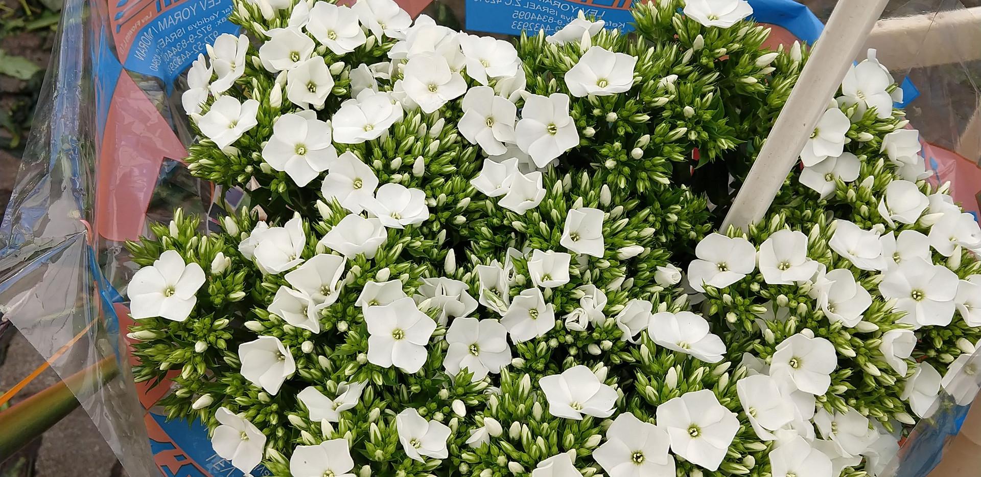Flowers 24.jpg