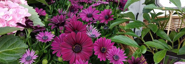 Flowers 22.jpg