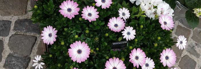 Flowers 21.jpg