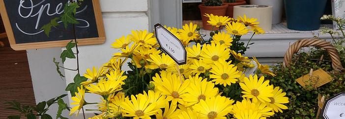 Flowers 20.jpg