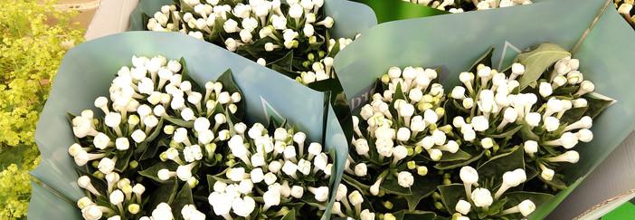 Flowers 14.jpg