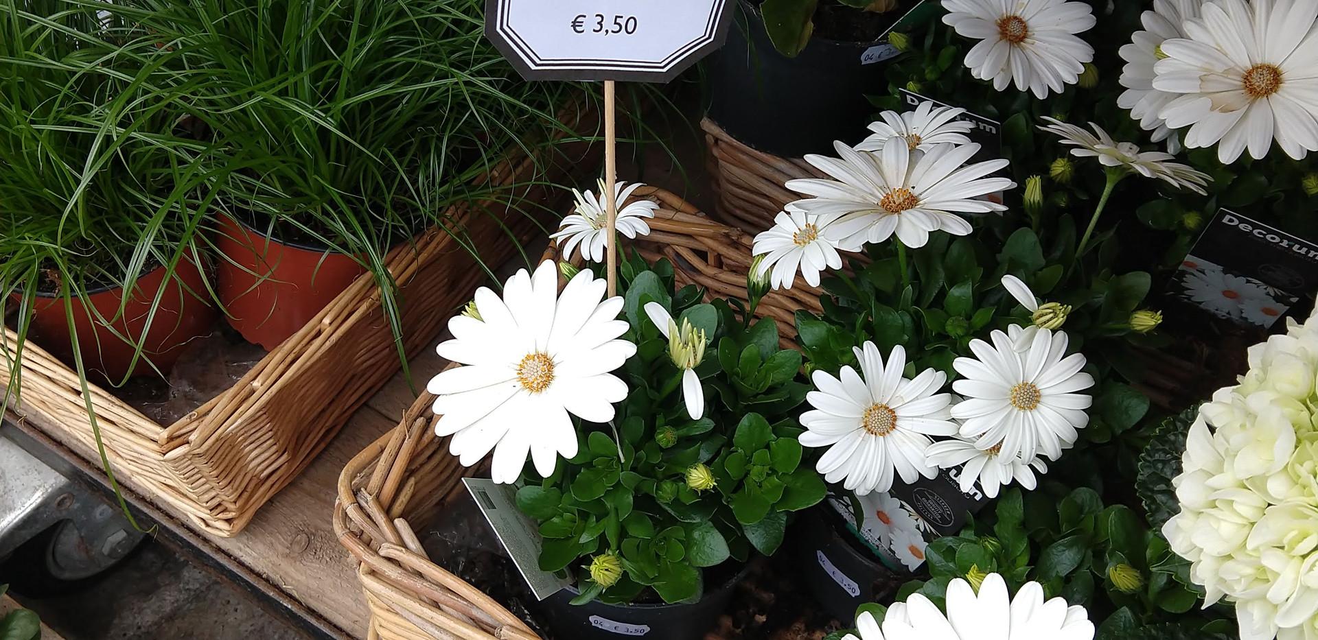 Flowers 23.jpg