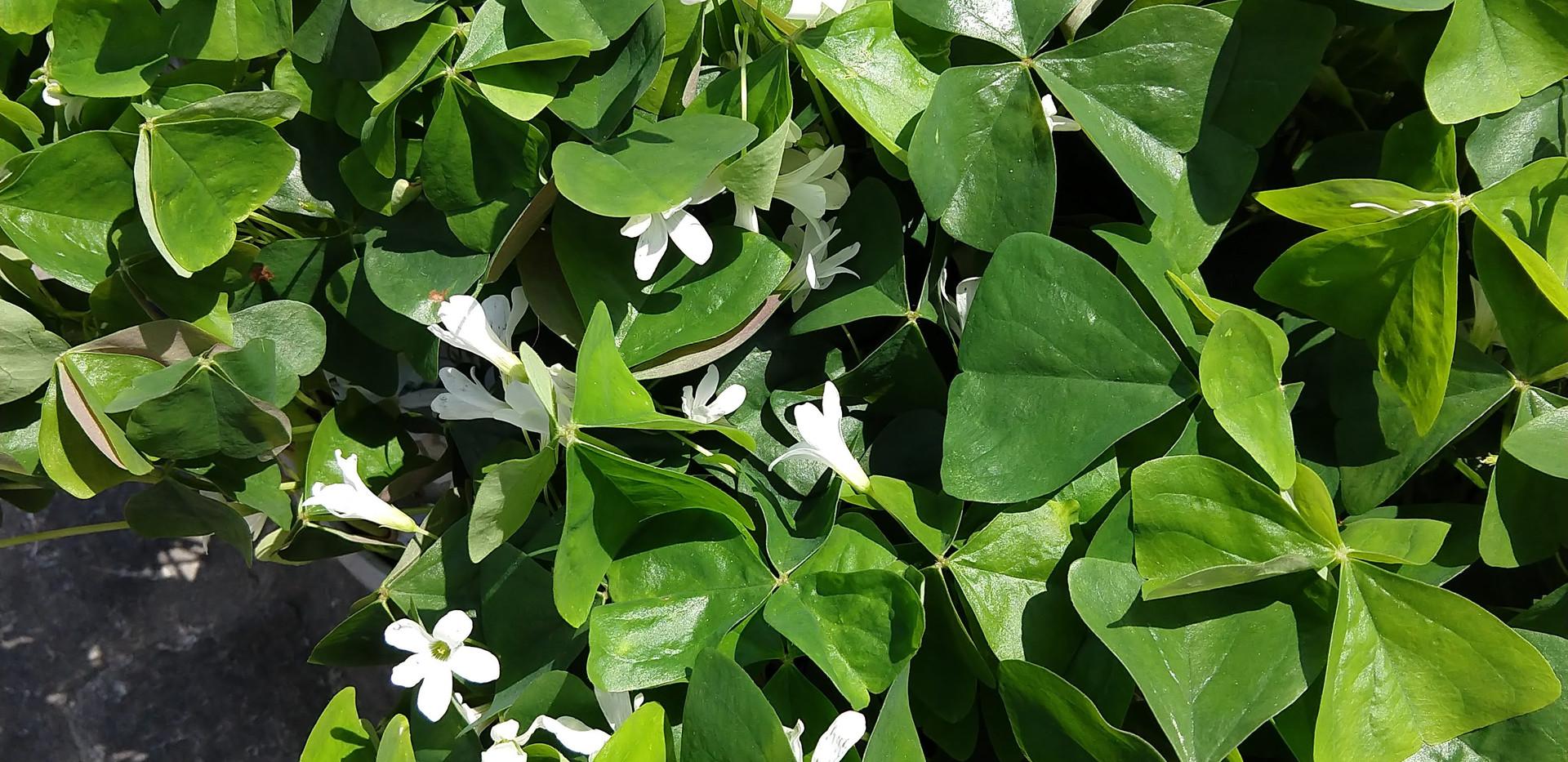 Flowers 10.jpg