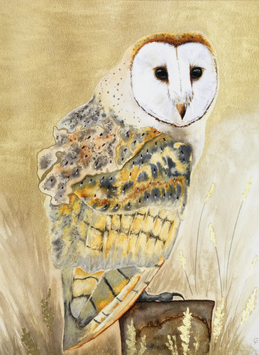 Gloucestershire Barn Owl