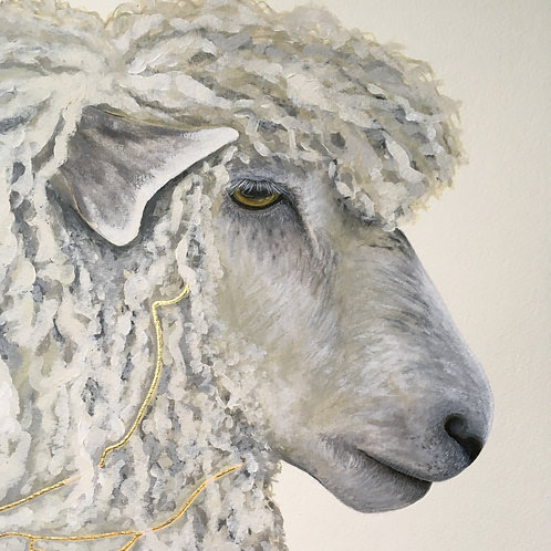 Stroud Cotswold Sheep
