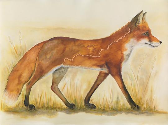 The Ridgeway Fox
