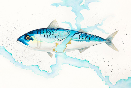 Salcombe Mackerel