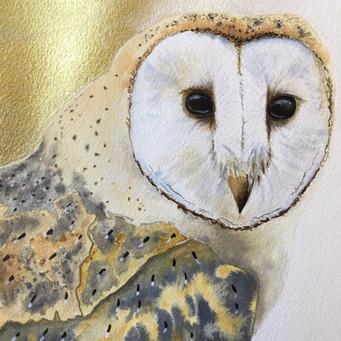 Gloucestershire Barn Owl (original artwork, detail).