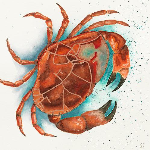 Padstow Brown Crab