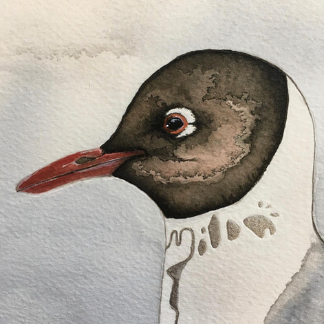 Mother Ivey's Bay Gull (detail).