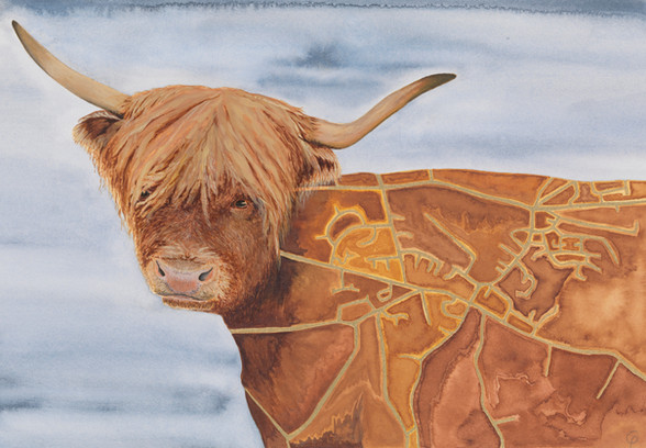 Minchinhampton Highland Cow