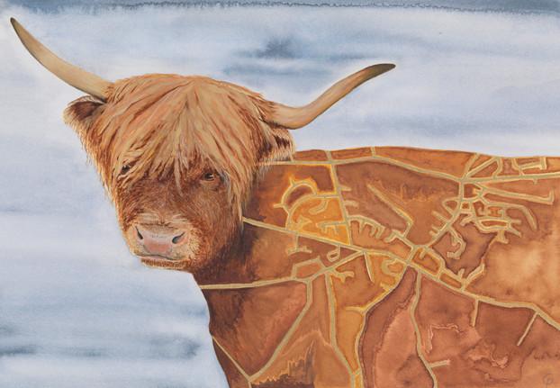 Minchinhampton Highland Cow
