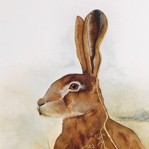 Nailsworth Hare