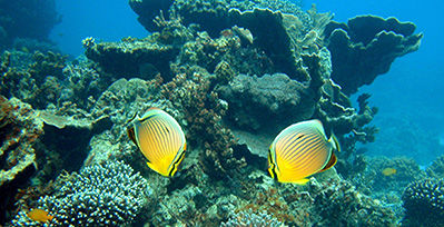Snorkelling-yellow-fish.jpg