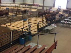 Lazy MC Angus Bull Set Up Large Arena 2015
